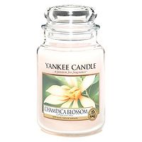 yankee candle classic large jar candle champaca blossom. Black Bedroom Furniture Sets. Home Design Ideas